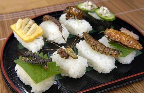 Sushi-de-insectos
